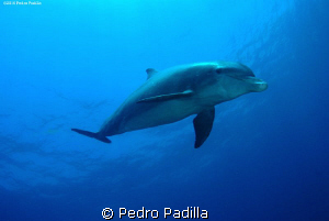 Diving with dolphins.